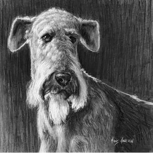 Airedale; 6.5x6.5 in; drawing; $400