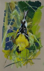 Goldfinch; 5x8 in; Gouache on paper; $250