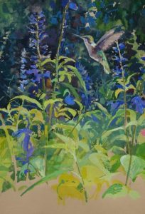 Hummingbird in Blue Salvia; 10x14 in; Gouache $500
