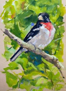 Rose-breasted Grosbeak; 5x8 in; Gouache on Paper; $250