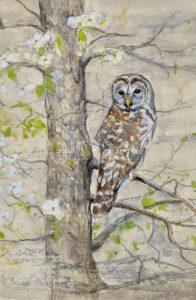 barred owl 11 x14 $400